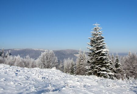 Beautiful winter landscape in the Ukrainian Carpathians