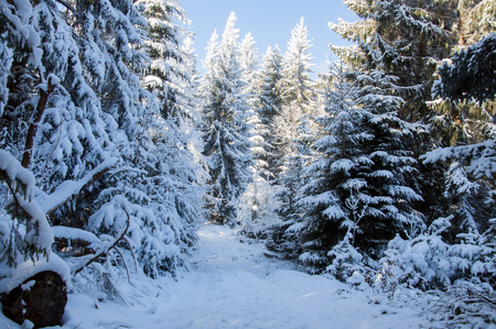 covered in snow: Winter landscape. Winter road in covered snow forest