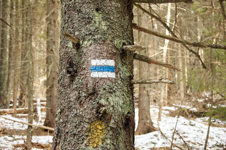 trail sign: Hiking tourist  trail sign  on the tree,walking the mountain path.