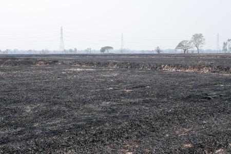 Burned Rice Straw Field, Desolate Landscape
