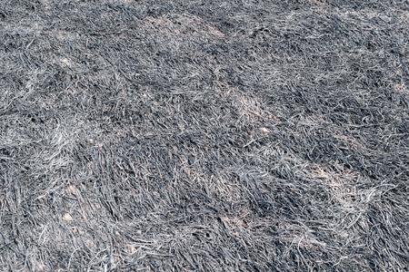 Burned Rice Straw Field