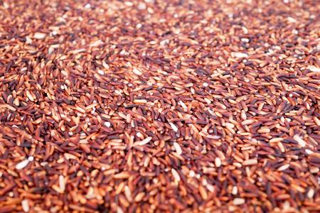 Raw Riceberry Rice, Selective Focus