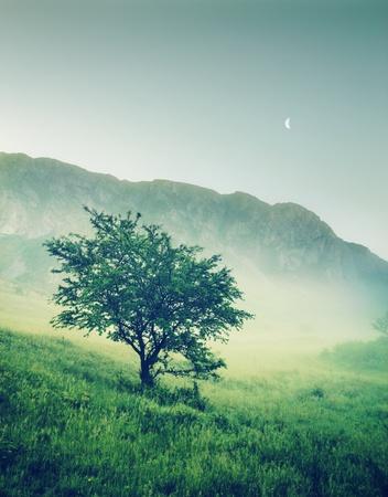 백그라운드에서 산들과 외로운 나무 스톡 콘텐츠