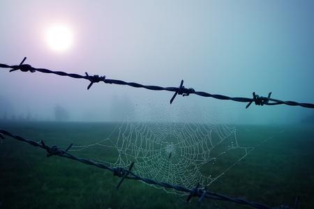 Closeup of a spider web in the sunrise