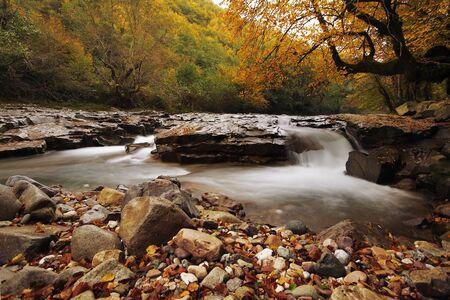Herbst Creek in Transilvania