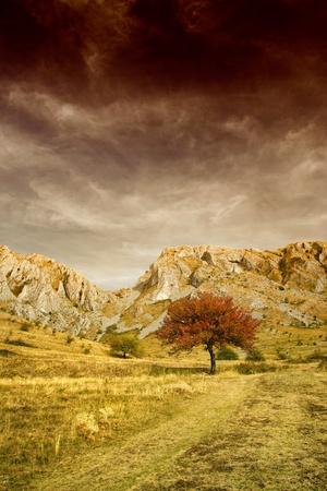 외로운 나무와 바위 산