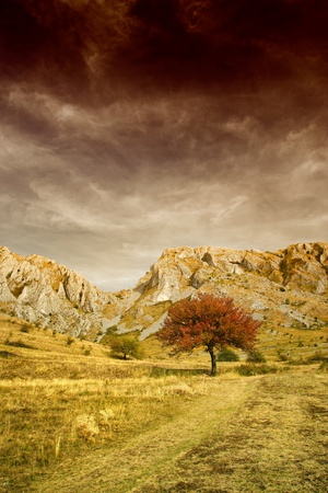 Lonely tree and rocky mountains