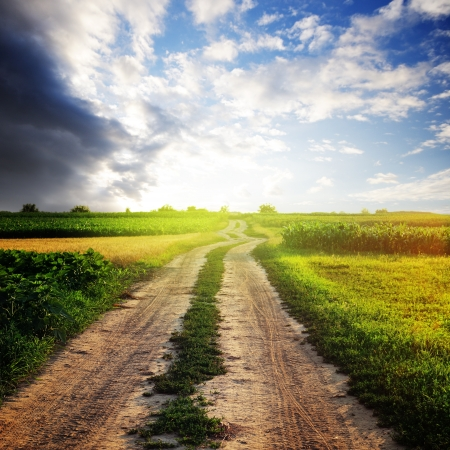 Rural road in the field and sunny sky