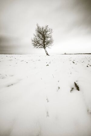Winter tree Stock Photo - 16434366
