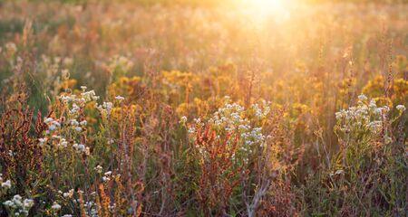 Sonnenschein und Blumen Lizenzfreie Bilder