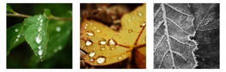Three colorful seasonal leaf images Stock Photo