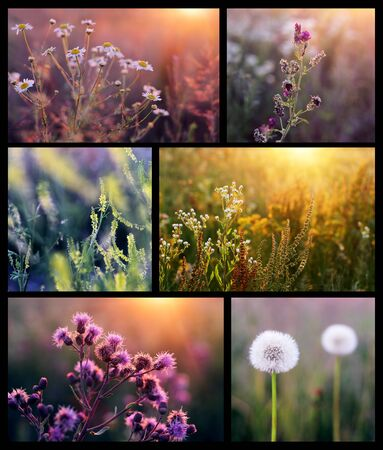 Collage with beautiful flowers in the sunshine Stock Photo