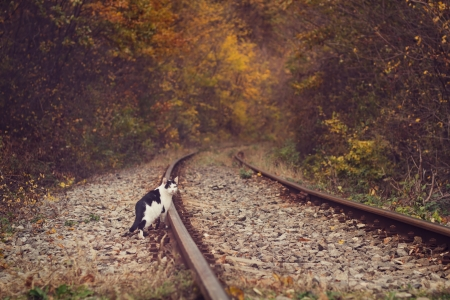 moggi: Lonely cat in autumnal forest on a railway