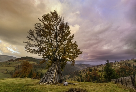 Landscape with tree dramatic sky and beautiful autumn colors photo