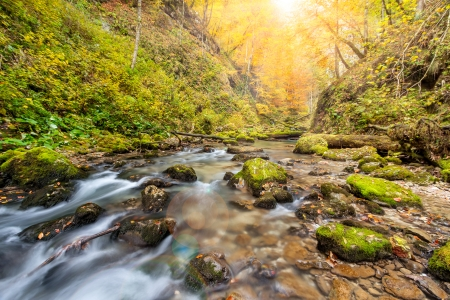 Amazing landscape photo in the autumn forest Stock Photo