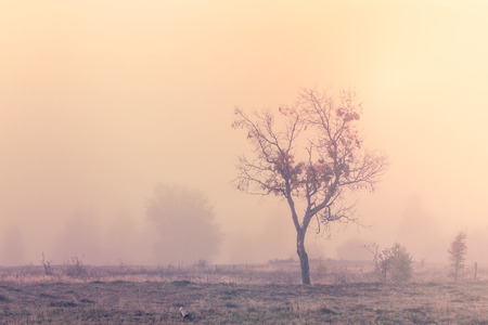 Misty morning scene with lonely tree