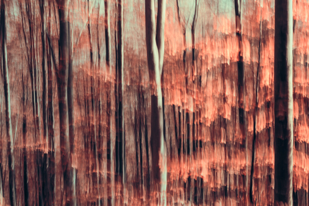 Artistic Abstract forest composition photo