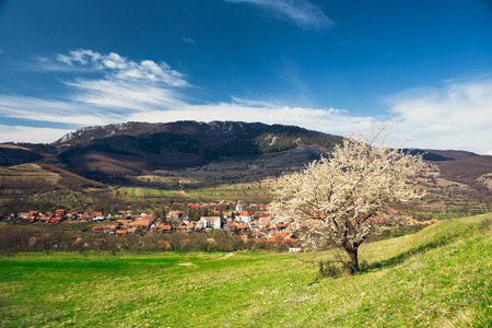 Village under the mountains in Transylvania with lonely spring tree  photo