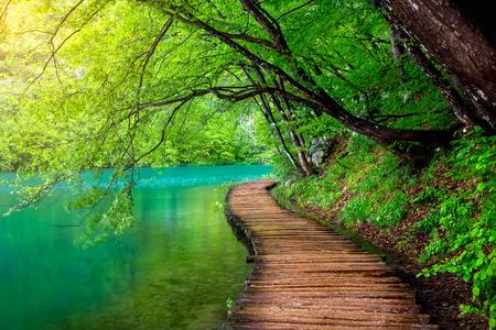 햇빛 플리트 비체 호수, 크로아티아의 맑은 물과 깊은 숲 스트림 스톡 콘텐츠