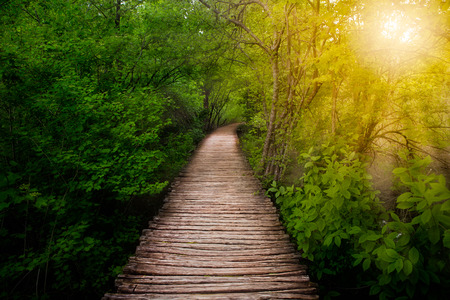 햇빛 플리트 비체 호수, 크로아티아 깊은 숲 경로 스톡 콘텐츠