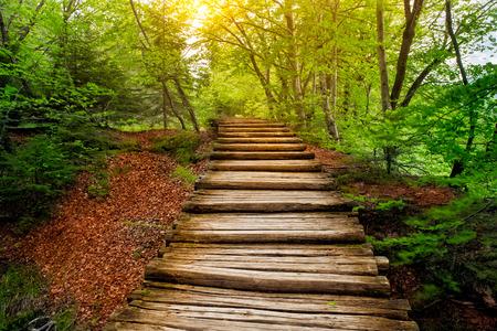 Profondo percorso foresta al sole. Laghi di Plitvice, Croazia