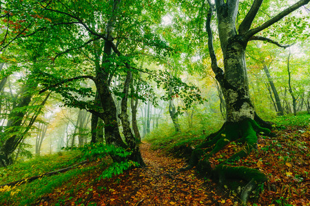 mystical forest: Beautiful colorful forest scene with path in the Croatian Plitvice National Park