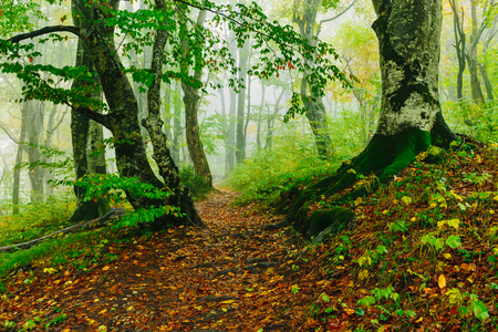 Beautiful colorful forest scene with path in the Croatian Plitvice National Park