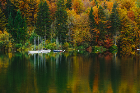 dream lake: Autumnal scenic view of boats on the Bohinj lake surrounded by colorful forest. Slovenia, Europe, Triglav National Park