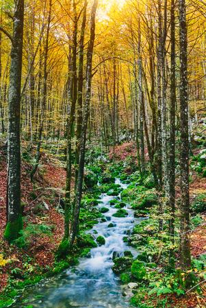 wide  wet: Gorgeous scene of creek in colorful autumnal forest near Bohinj lake Slovenia, Europe. Triglav national park.