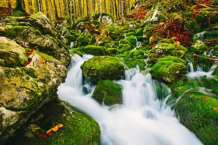 cascade: Gorgeous scene of creek in colorful autumnal forest near Bohinj lake Slovenia, Europe. Triglav national park.