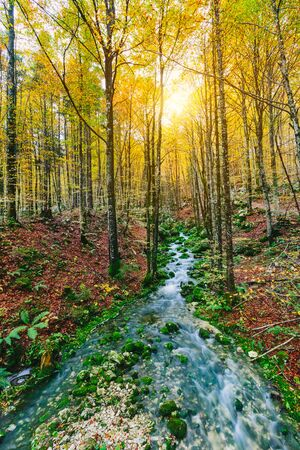 blurred background: Gorgeous scene of creek in colorful autumnal forest near Bohinj lake Slovenia, Europe. Triglav national park.