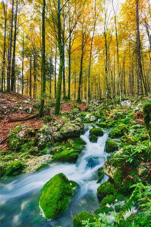 Gorgeous scene of creek in colorful autumnal forest near Bohinj lake Slovenia, Europe. Triglav national park.