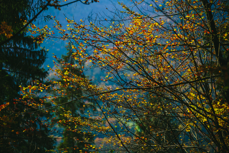Forest trees. Nature backlight on the colorful leafs. Stock Photo
