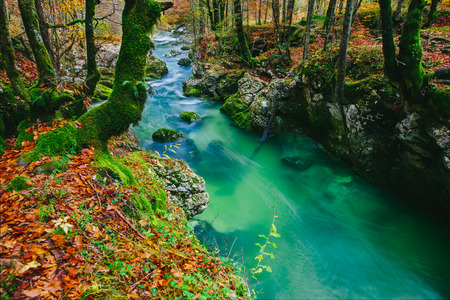 Fantastic view of the canyon Mostnica Mostnice Korita with crystal clear blue water, colorful forest and white rocks - Triglav national park, near Bled, Slovenia, Europe