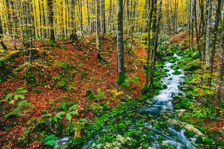 slovenia: Gorgeous scene of creek in colorful autumnal forest near Bohinj lake Slovenia, Europe. Triglav national park.
