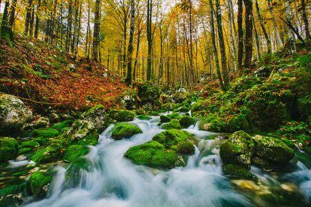 보 히니 호수 슬로베니아, 유럽에 가까운 화려한 단풍 숲에서 크릭의 화려한 장면. Triglav 국립 공원. 스톡 콘텐츠
