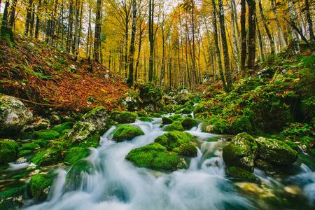 Gorgeous scene of creek in colorful autumnal forest near Bohinj lake Slovenia, Europe. Triglav national park.