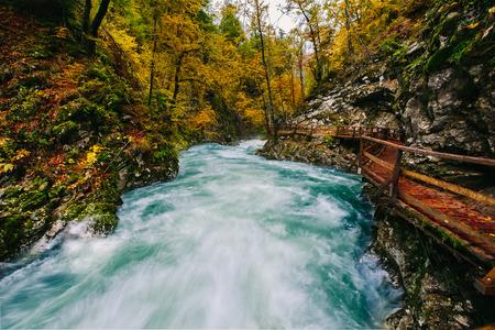 나무 거주자와 유명한 Vintgar 협곡, 블 레드, 라브, 슬로베니아, 유럽 스톡 콘텐츠