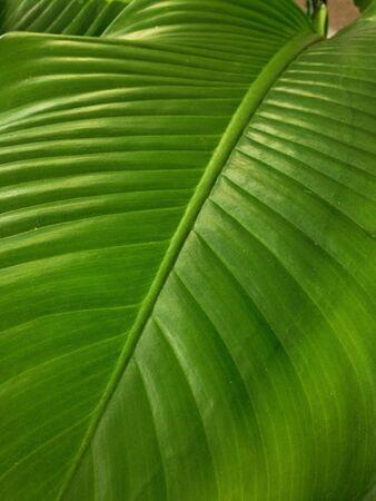 taxonomy: Leaf background Stock Photo