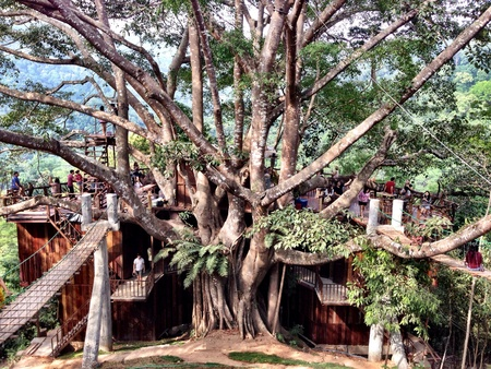life extension: Jungle big tree restaurant, Chiang Mai