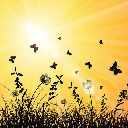 morning dew: Sunshine on spring and summer with butterflies in the grass Illustration