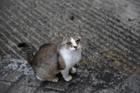 Secreción ocular en gatos