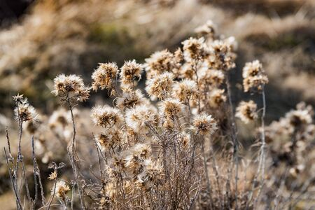 Desert bushes of the Boise foothills of Idaho.