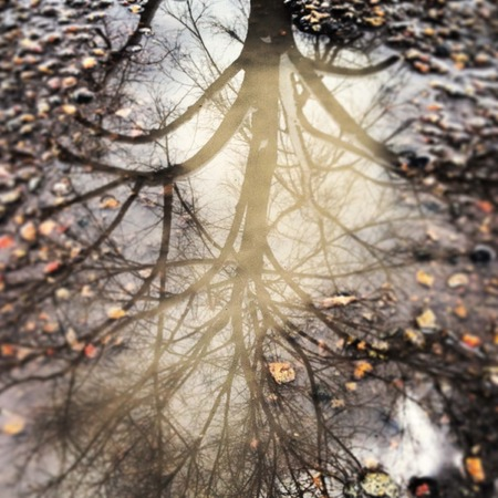 reflection: reflection of a leafless tree in a muddy puddle on the road after a spring rain storm