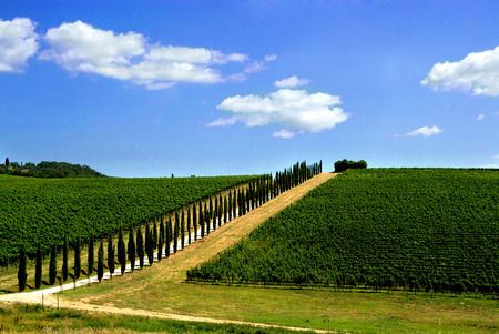 Avenue lined with cypress trees in Tuscan vineyard photo