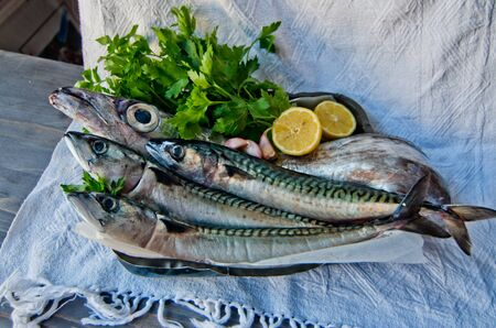 thunnus: blue fish freshly caught great for a healthy diet ready to be cooked with parsley and lemon oil Stock Photo