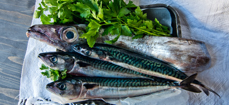 blue fish freshly caught great for a healthy diet ready to be cooked with parsley and lemon oil Stock Photo