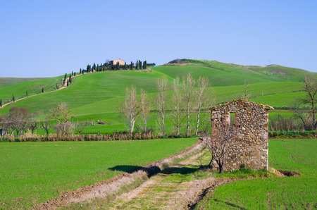 Tuscan countryside with farm and rows of trees, cypresses, poplars and cultivated fields with ruin Stock Photo