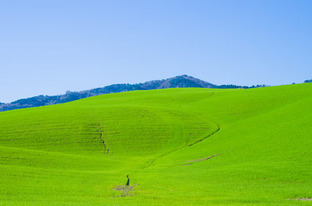 landscape with bright green cultivated fields under the blue sky Stock Photo