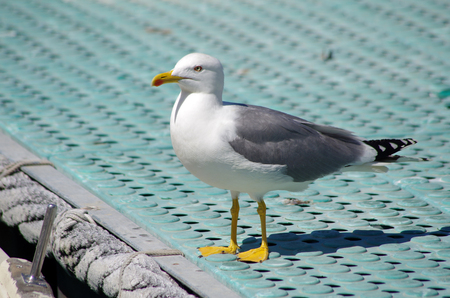 gray and blue seagull on the pier of the pier light blue color Stock Photo